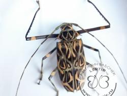 Жуки и другие насекомые