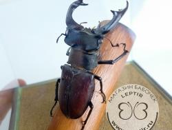 Жуки и др. насекомые в кубе