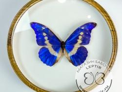 Бабочки в круглых рамках