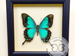 Средние бабочки