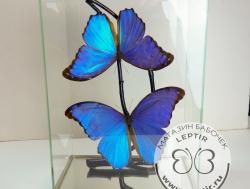 Бабочки в кубе