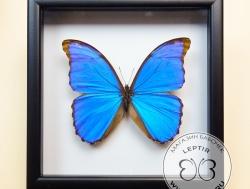 Бабочка в квадратной рамке