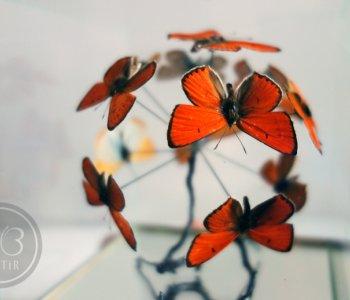 Оранжевый шар из червонцев