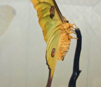 Мадагаскарская Комета ♀ в кубе