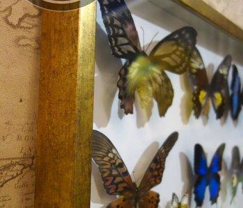 Панно Дневные бабочки Мира