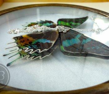 Кулон из крыла Урании мадагаскарской