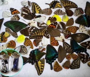 Крылья бабочек микс (50 шт)