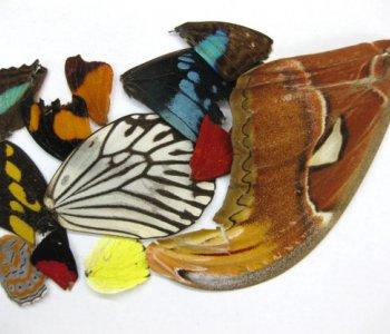 Крылья бабочек микс (30 шт)