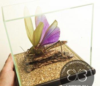 Кузнечик фиолетовый в кубе