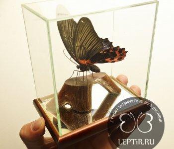Парусник Румянцева в кубе