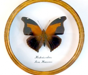 Хисториус Одиус (круглая)