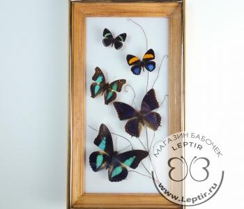 Коллаж тропические бабочки 8