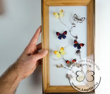 Коллаж тропические бабочки 14