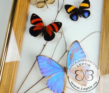 Коллаж тропические бабочки 16