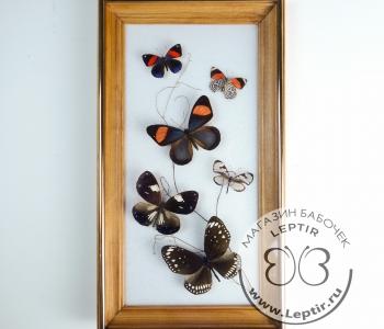 Коллаж тропические бабочки 18