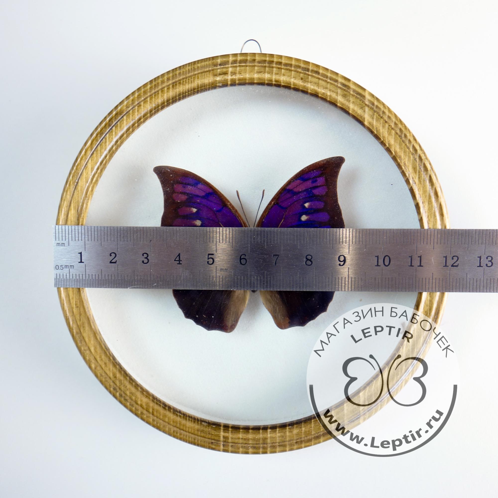 Полиграфия Тириантина бархат (кругл)