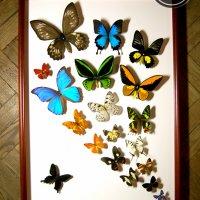 Фонтан из бабочек
