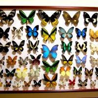 Панно Бабочки Мира (90х70)