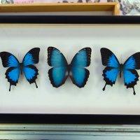 Панно Синий веер
