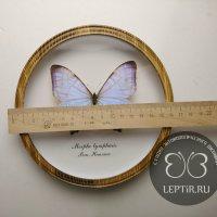 Морфо Лимфарис (круглая)