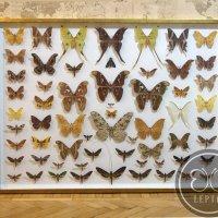 Панно Ночные бабочки мира
