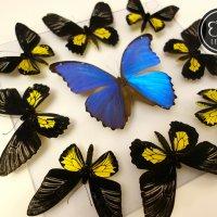 Мозайка желто-синяя