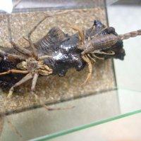 Битва Паука и Скорпиона в кубе