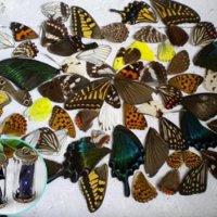 Крылья бабочек микс (10 шт)