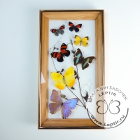 Коллаж тропические бабочки 3