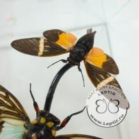Две цикады в кубе