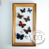 Коллаж тропические бабочки 15